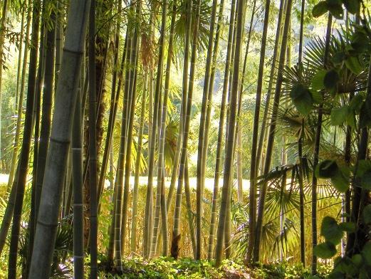Que visiter depuis Les Asphodèles - Vallée de la Vis ? Bambouseraie d'Anduze