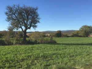 Causse de Blandas, près du gite Les Asphodèles - Vallée de la Vis