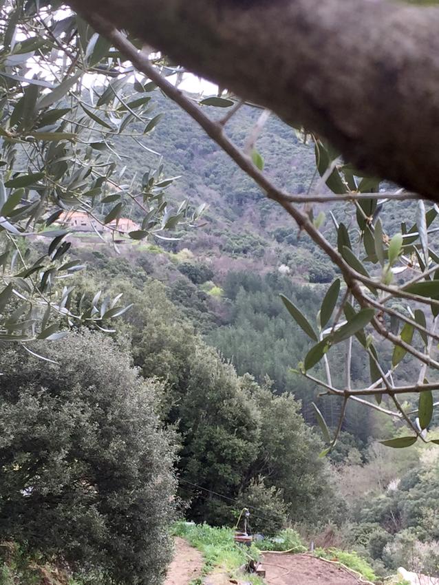 Cévennes schisteuses près du gite Les Asphodèles - Vallée de la Vis