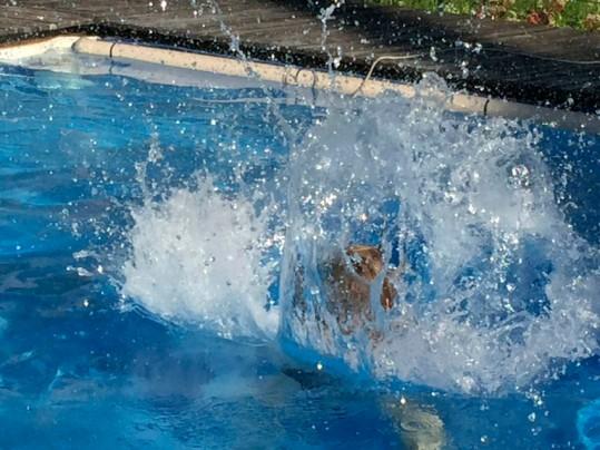 Jeu d'eau dans la piscine du gite Les Asphodèles-Vallée de la Vis