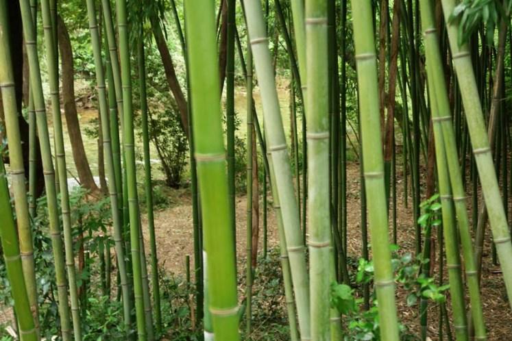 gite-les-asphodeles-bambouseraie
