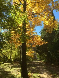 Parc en automne au gite Les Asphodèles-Vallée de la Vis