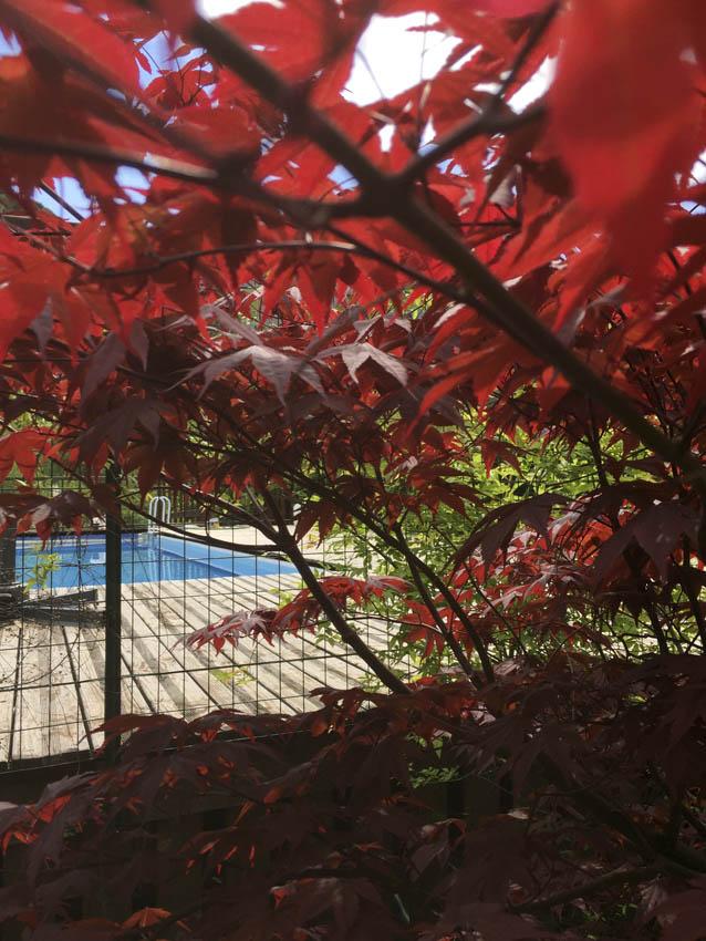 Piscine fermée aux Asphodèles-Vallée de la Vis