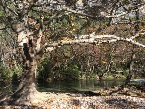 L'automne aux Asphodèles - Vallée de la Vis : La Vis, rivière sauvage