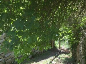 Descente vers la Vis, au gite Les Asphodèles-Vallée de la Vis